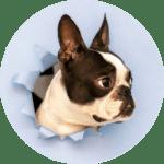 Dog-Paper-Hole