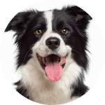 DogCircle