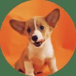 Doggo - alvan-nee-9M0tSjb-cpA-unsplash