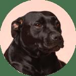 Doggo - victor-grabarczyk-2pbnDRhXc6Q-unsplash